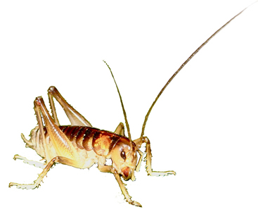 ground weta1